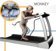 monkey controls robot