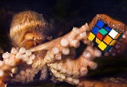 octopus solves rubik's cube